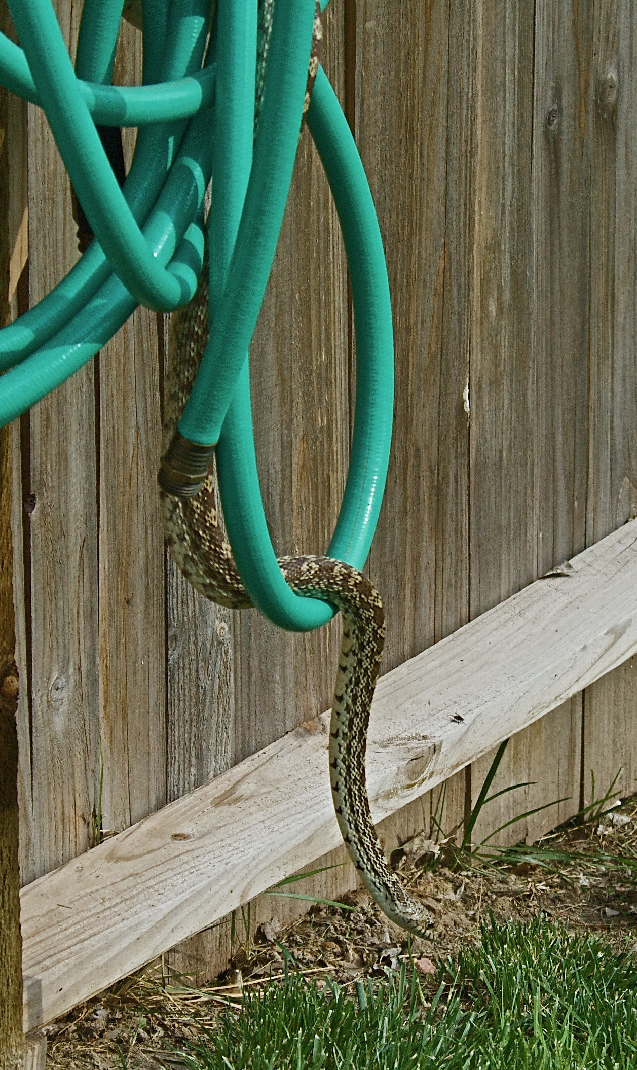 Bull Snake and 50-foot Hose