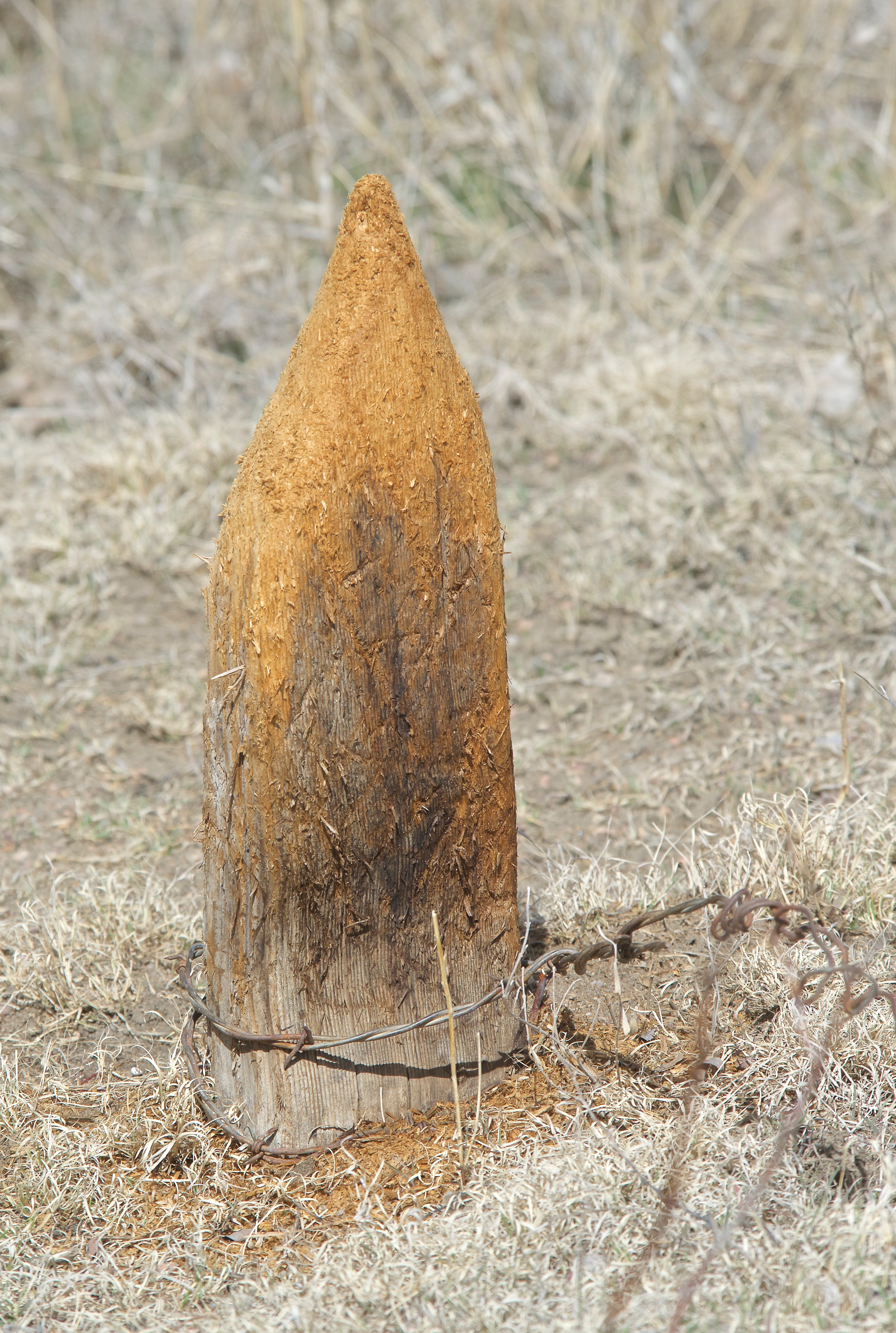 Fence Post Sharpened to a Nubbing by Deer