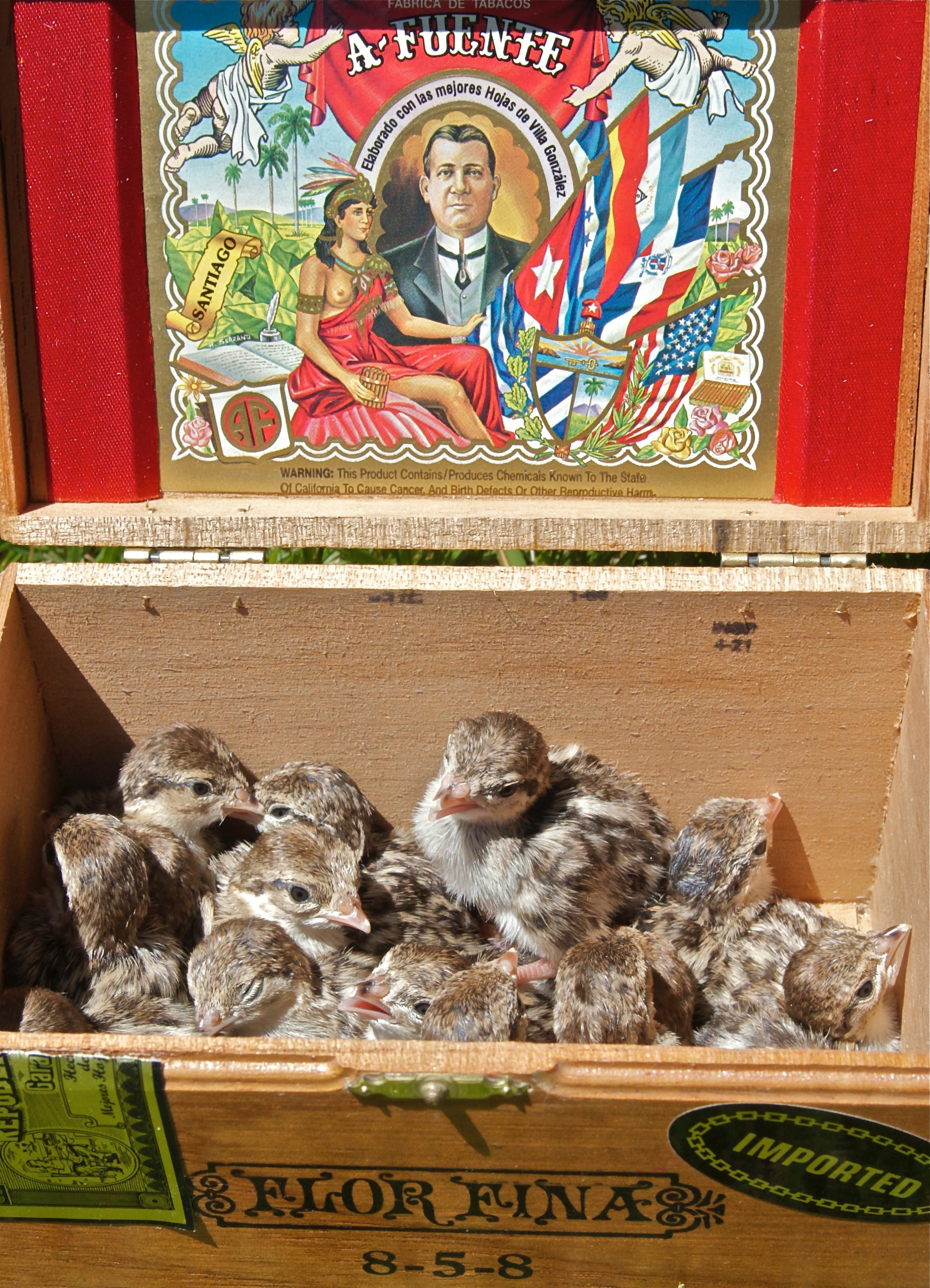 Chukar in a Box